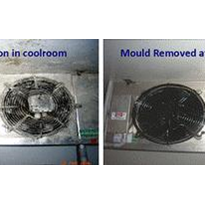 Why are mould & bacteria in coolrooms a problem?