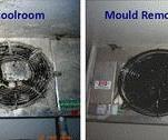 Mould & Bacteria in Coolrooms