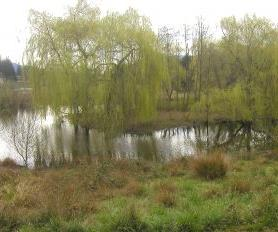 More than five and a half megalitres of water could potentially be saved annually per hectare of willow canopy area removed.