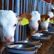 Major Time, Energy and Cost Savings for Animal Feed Suppliers