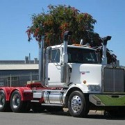 Used Trucks - Western Star 4900 FX