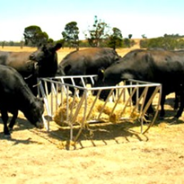 Cattle Yards - Cradle Hay Feeders