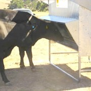 Cattle Feed - Cattle Feeder