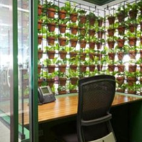Indoor Plant Design Services