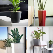 Indoor Plant Containers  | Chillout Range