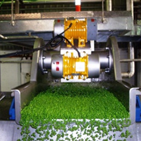 Proven Vegetable Processing