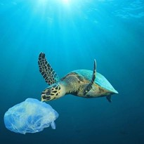 Stop Plastic or Stop Breathing?