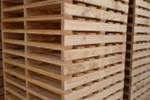 Plastic, Standard and Custom Export Pallets | CMTP | Pallets