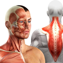 Exercises to improve neck problems in manual workers