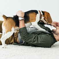 Beagles successfully identify lung cancer by scent