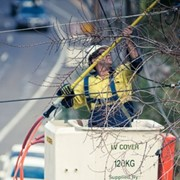Managing trees and vegetation near powerlines