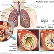 How Your Lungs Balance Your Body's pH Level
