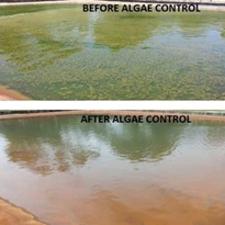 Algae Controller for Lakes and Ponds